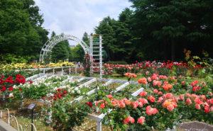 代々木公園のバラ園