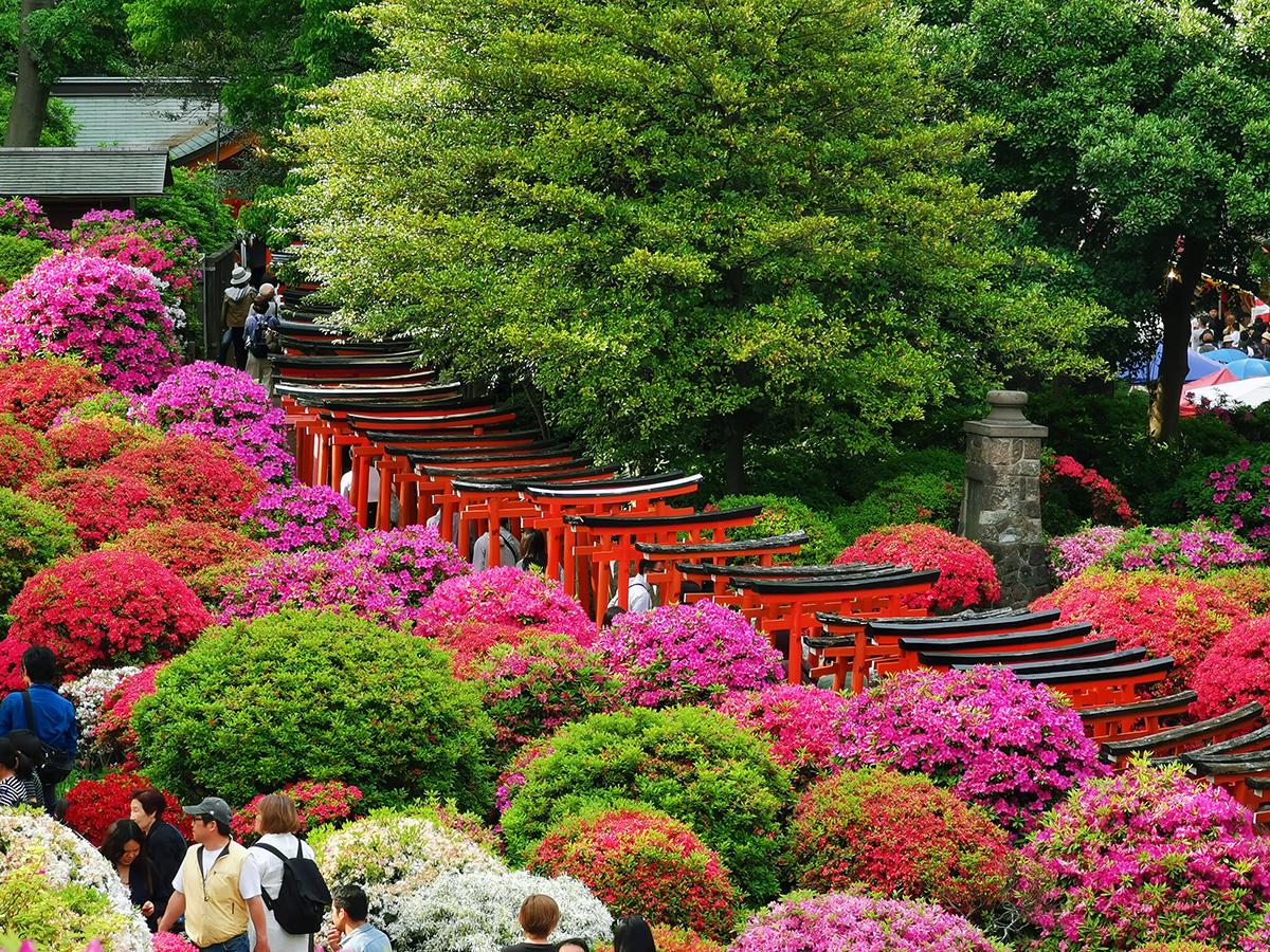 根津神社つつじ祭り2019