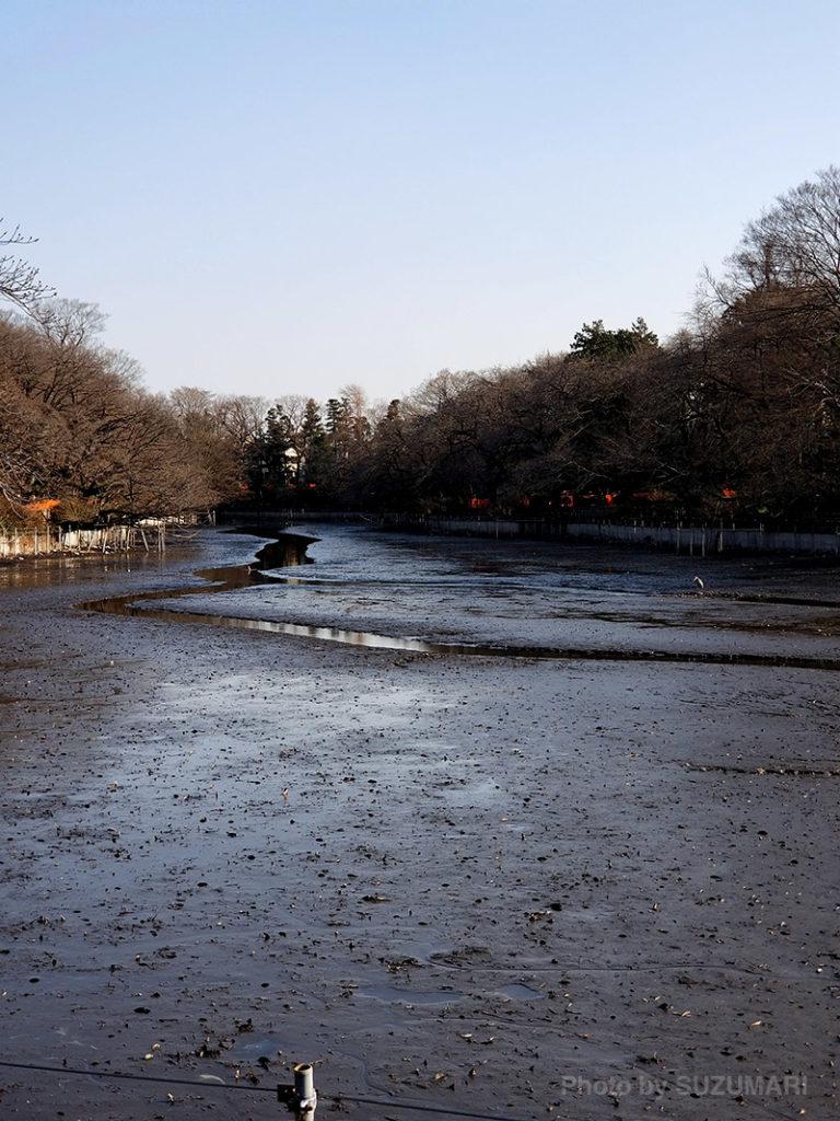 かい掘り中の井の頭公園の池