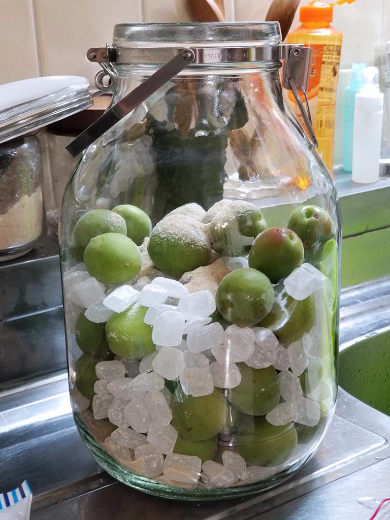保存瓶の中に、青梅と氷砂糖を交互に入れます