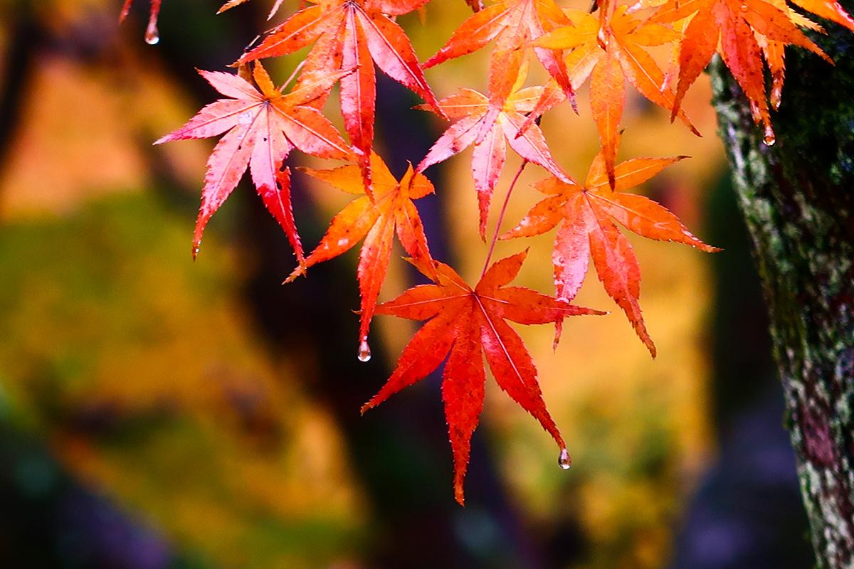 秋の京都旅2019