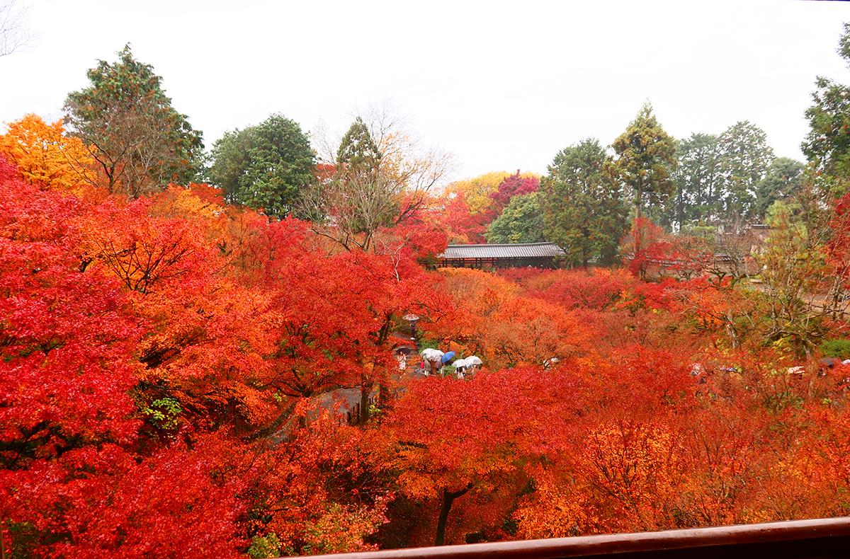 雨の東福寺での眺め