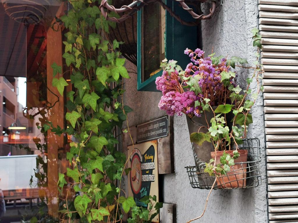 入口の観葉植物